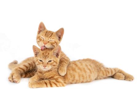 Cats Megamenu